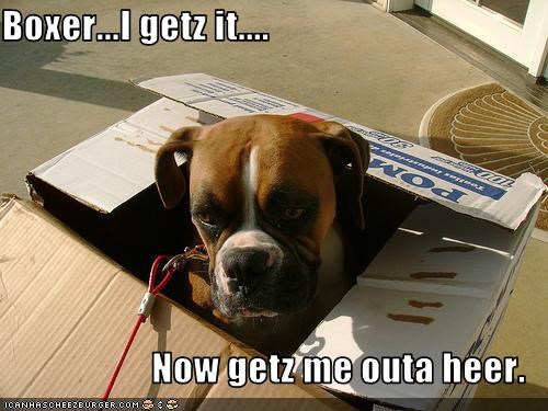 Boxer...I getz it....  Now getz me outa heer.