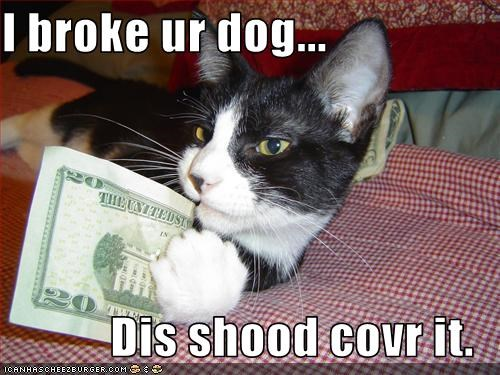 I broke ur dog...  Dis shood covr it.