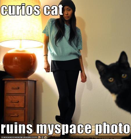 curios cat  ruins myspace photo