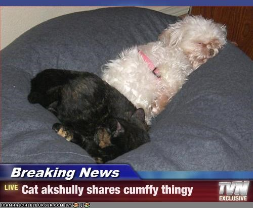 Breaking News - Cat akshully shares cumffy thingy