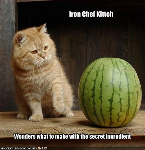 confused,cooking,ginger,lolcats,nom nom nom,watermelon