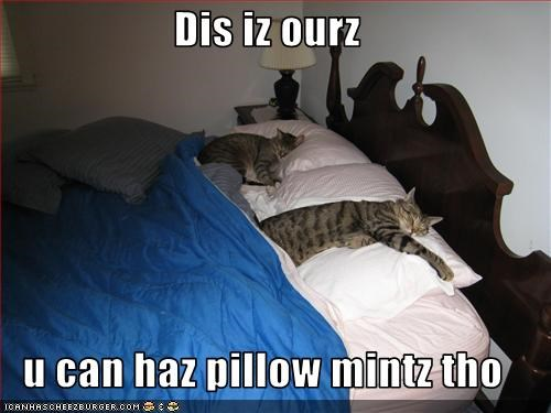 Dis iz ourz  u can haz pillow mintz tho