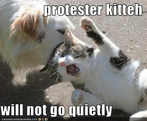 protester kitteh  will not go quietly
