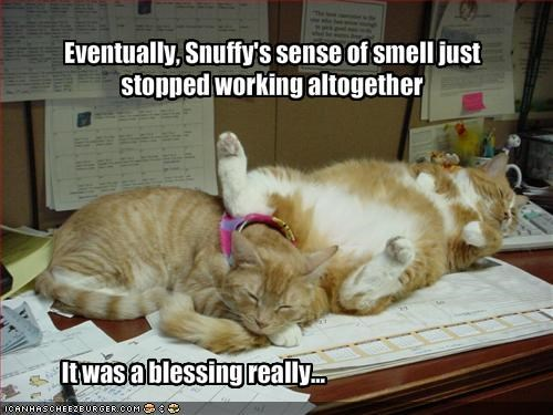 Eventually, Snuffy's sense of smell just stopped working altogether