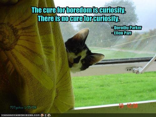 Curiosity...