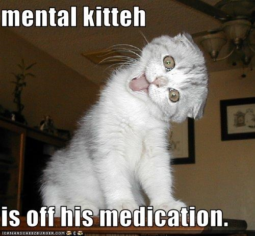 mental kitteh  is off his medication.