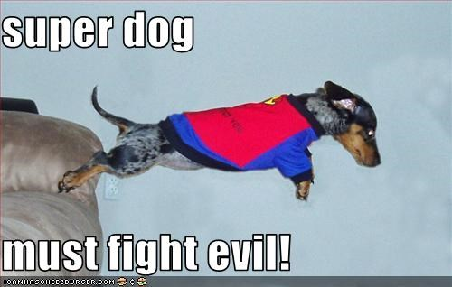 super dog  must fight evil!