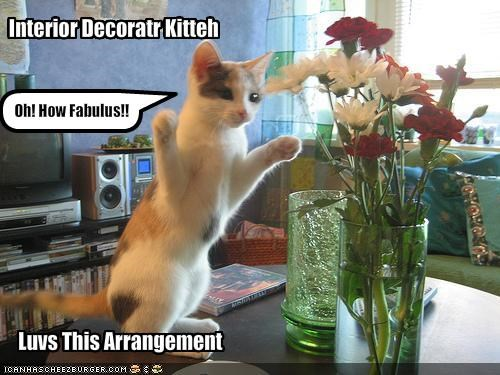 cute,decorations,excited,kitten,lolcats,lolkittehs,vase