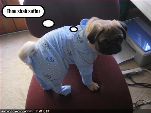 costume,cute,pug,threats