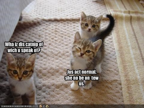 Wha iz dis catnip of wich u speak of?