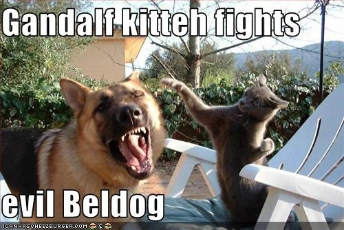 Gandalf kitteh fights  evil Beldog