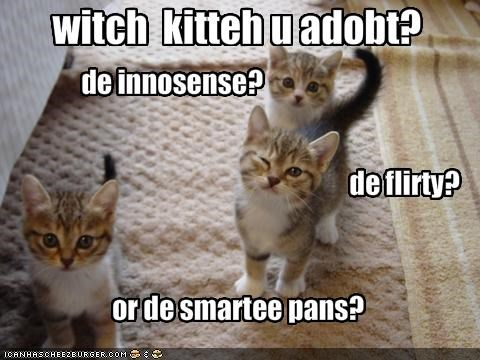 witch  kitteh u adobt?