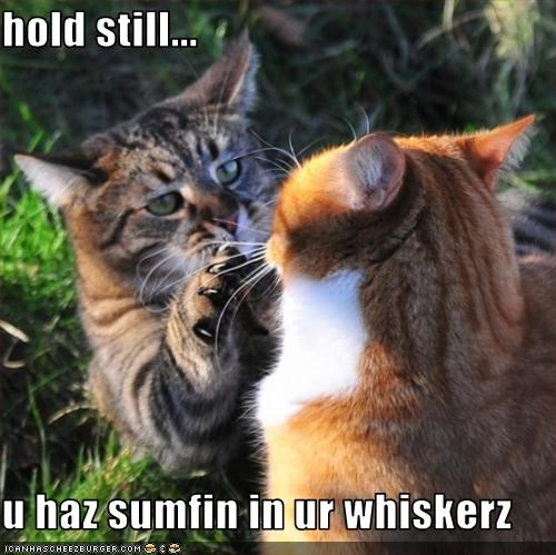 hold still...  u haz sumfin in ur whiskerz