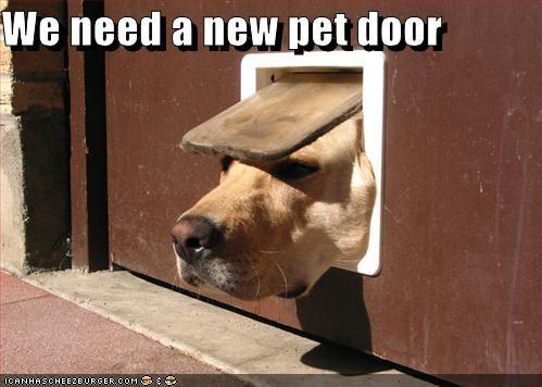We need a new pet door