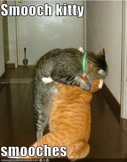 Smooch kitty  smooches