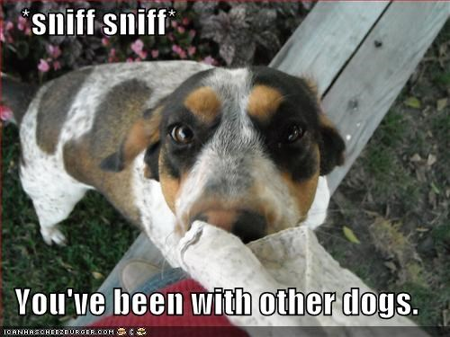 *sniff sniff*     You've been with other dogs.