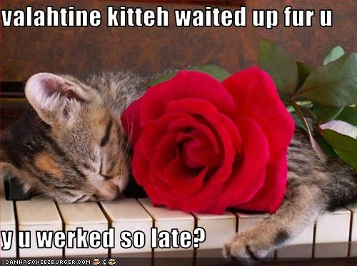 valahtine kitteh waited up fur u  y u werked so late?