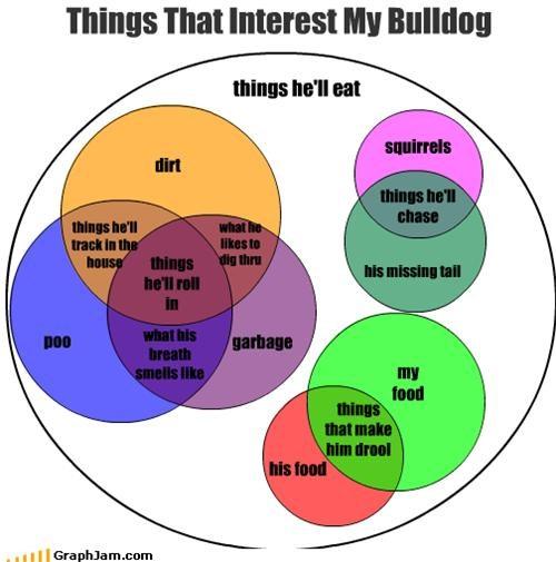 Things That Interest My Bulldog
