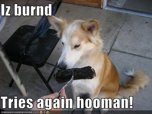 Iz burnd  Tries again hooman!