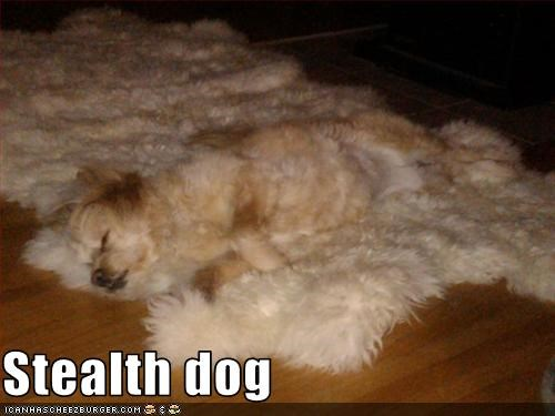 Stealth dog