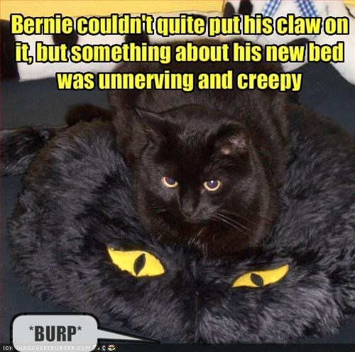 Bernie couldn't quite put his claw on it, but something about his new bed was unnerving and creepy