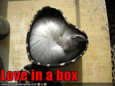 Love in a box