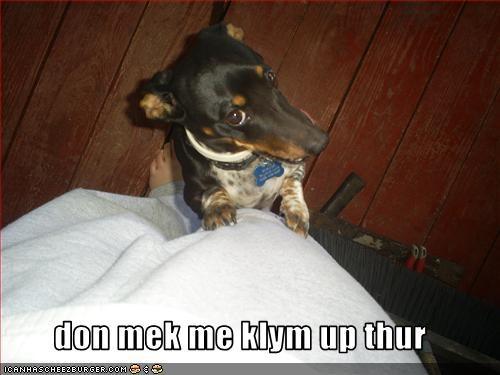 dachshund,threats