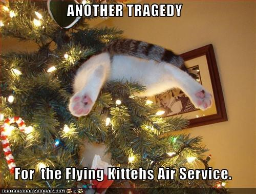 ANOTHER TRAGEDY  For  the Flying Kittehs Air Service.