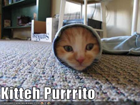 Kitteh Purrrito