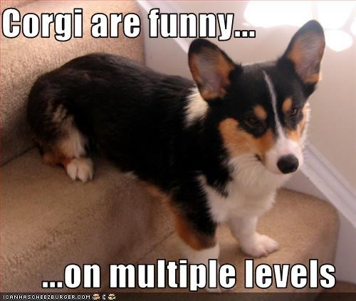 Corgi are funny... ...on multiple levels