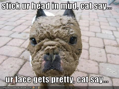 stick ur head in mud, cat say...  ur face gets pretty, cat say...