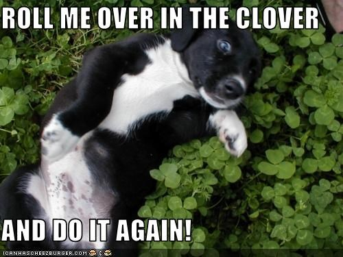 ROLL ME OVER IN THE CLOVER   AND DO IT AGAIN!
