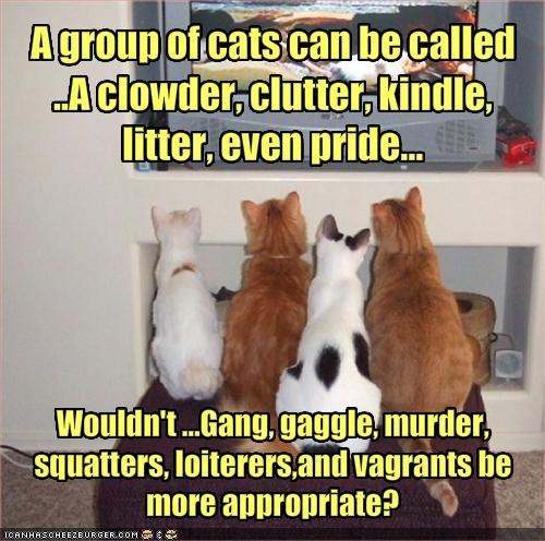 A group of cats can be called ..A clowder, clutter, kindle, litter, even pride...