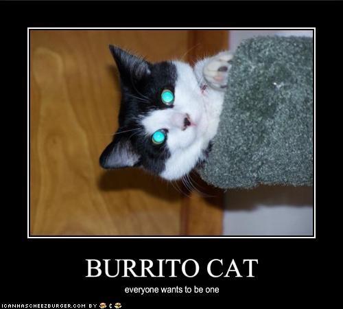 BURRITO CAT