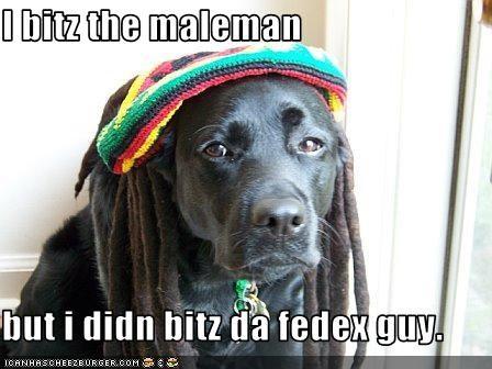 bite,bob marley,costume,hat,labrador