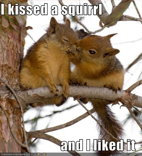 I kissed a squirrl  and I liked it