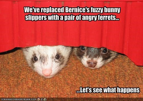 We've replaced Bernice's fuzzy bunny slippers with a pair of angry ferrets...