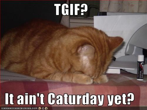 TGIF?  It ain't Caturday yet?