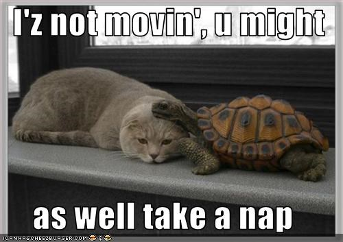 I'z not movin', u might  as well take a nap