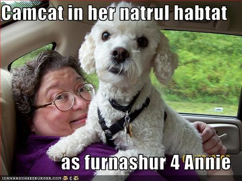 Camcat in her natrul habtat  as furnashur 4 Annie