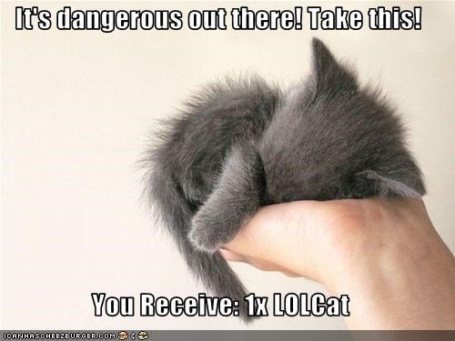 It's dangerous out there! Take this!  You Receive: 1x LOLCat