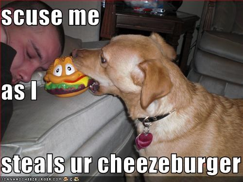 scuse me as I steals ur cheezeburger