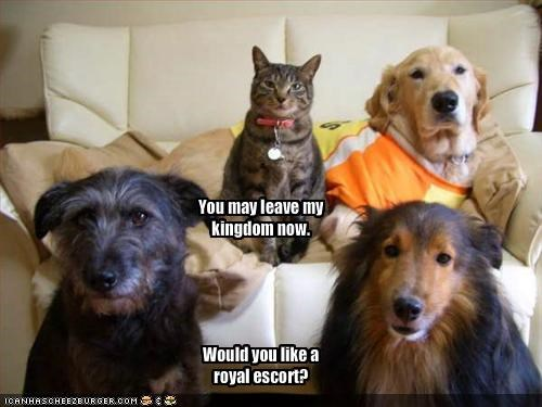 collie,couch,golden retriever,guard dog,indoors,king,living room,lolcats
