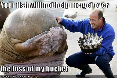 Your fish will not help me get over  the loss of my bucket