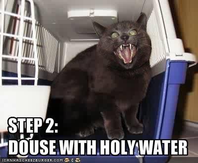 basement cat,evil,instructions