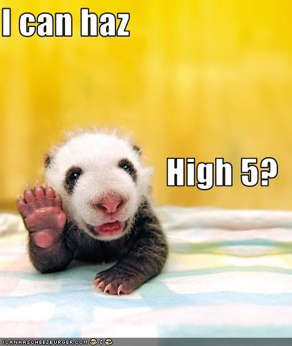 I can haz High 5?