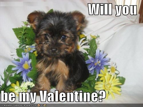 love,puppy,Valentines day,yorkshire