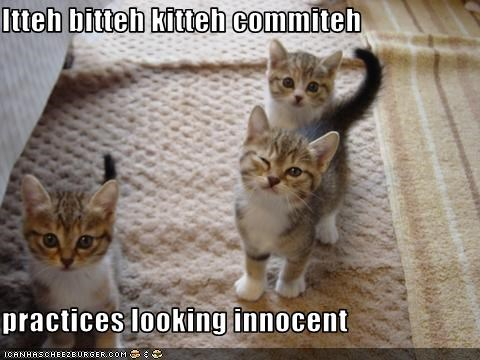 Itteh bitteh kitteh commiteh  practices looking innocent