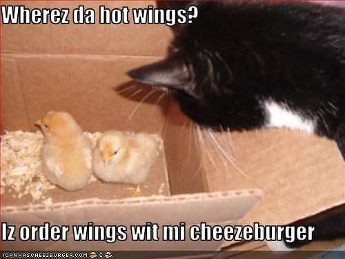 Wherez da hot wings?  Iz order wings wit mi cheezeburger