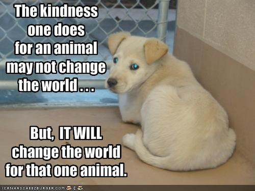 The kindness one does